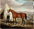 Sir Briggs, horse of Lord Tredegar, in camp in the Crimea, 1854