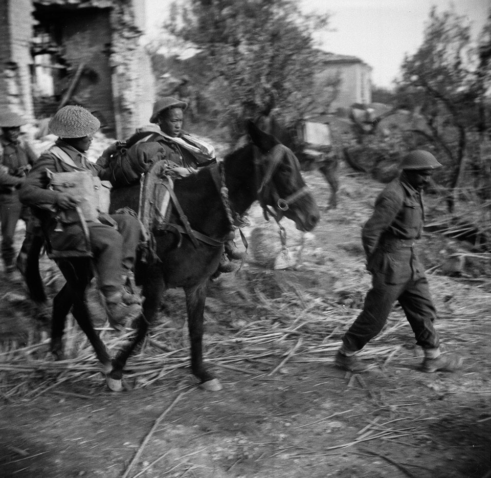 Gurkha wounded being evacuated by mule, Italy, 1943